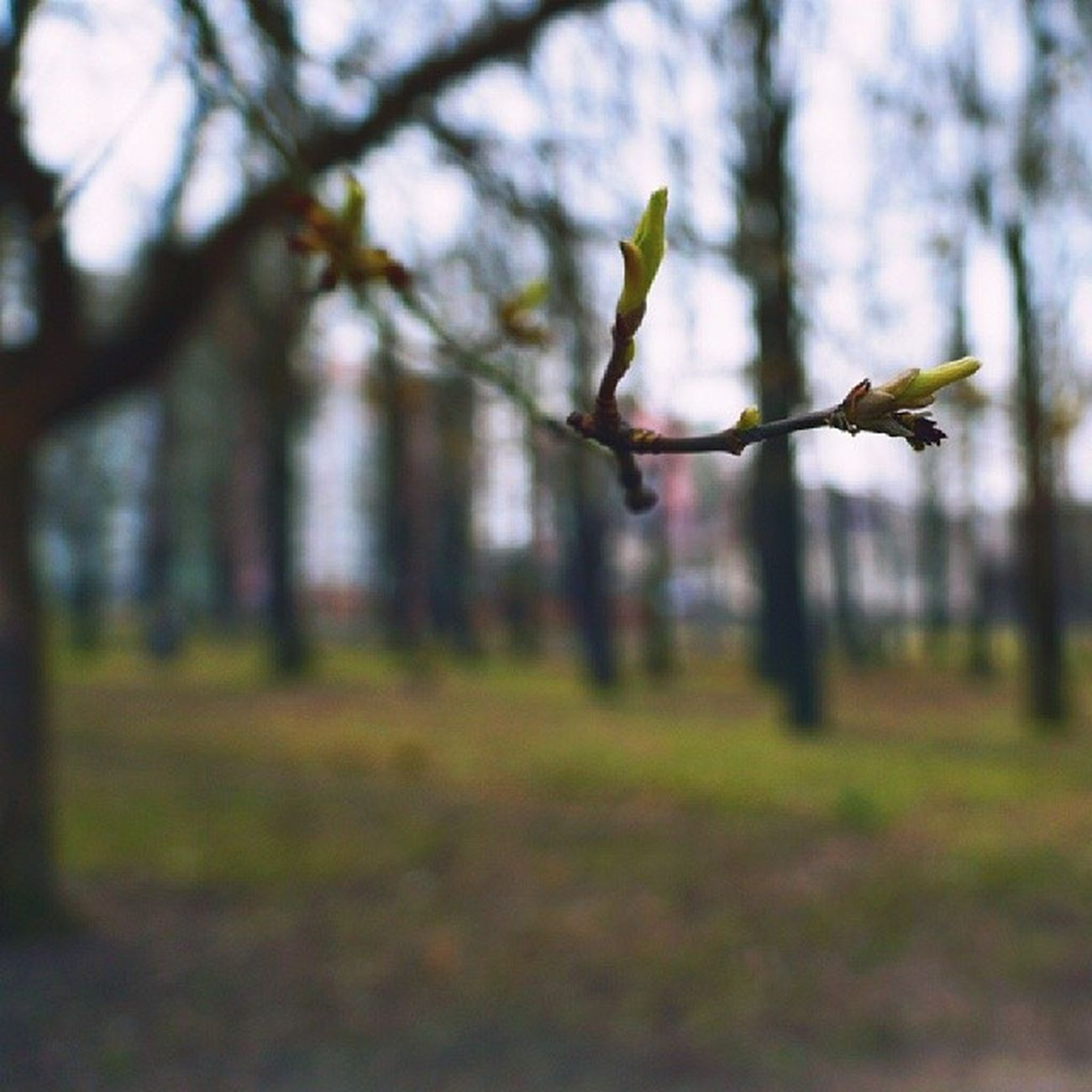 It's Spring Spring Lovetime