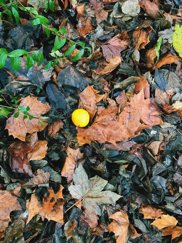 Orphange Sun In The Ground Autumn-Winter Art By Laziz London's Winter Nature Leaves Outdoors No People Beauty In Nature British Winter