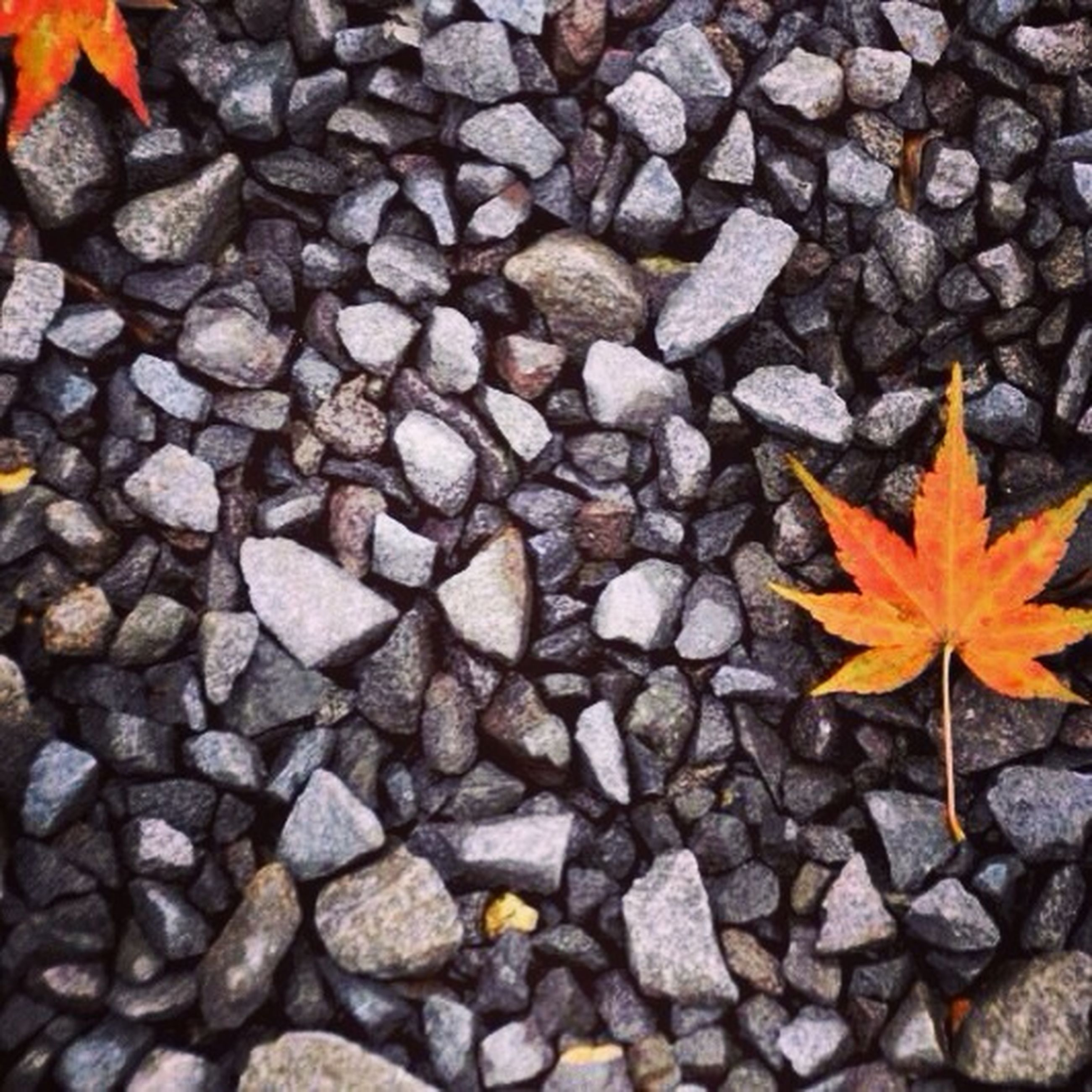 autumn, change, season, abundance, leaf, orange color, fallen, large group of objects, dry, high angle view, leaves, nature, backgrounds, full frame, yellow, maple leaf, stone - object, day, outdoors, beauty in nature