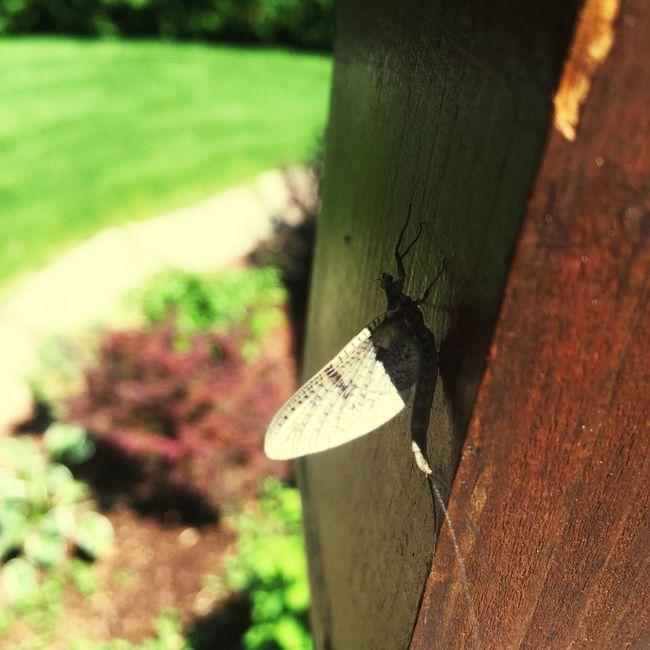 Bugslife Raw Beauty Taking Photos Enjoying Life