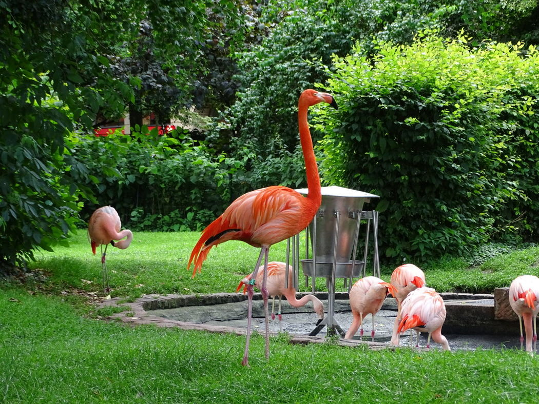 Flamingo Flamingo Flamingo At The Zoo Flamingo Gardens Flamingos