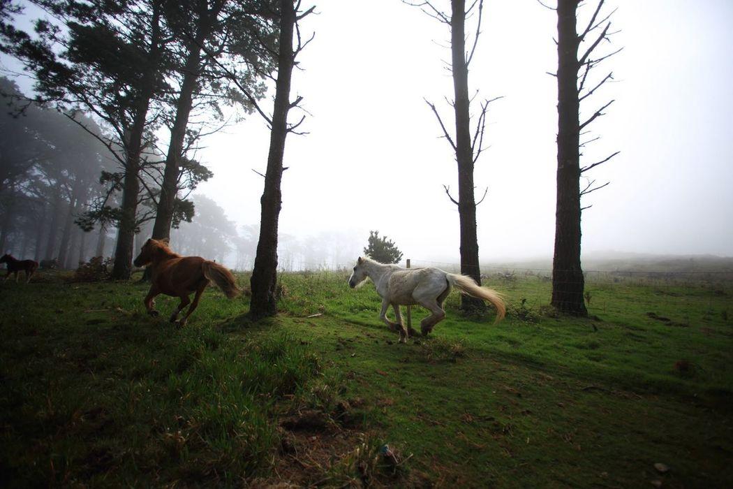 Capelada Nature Caballos Horse