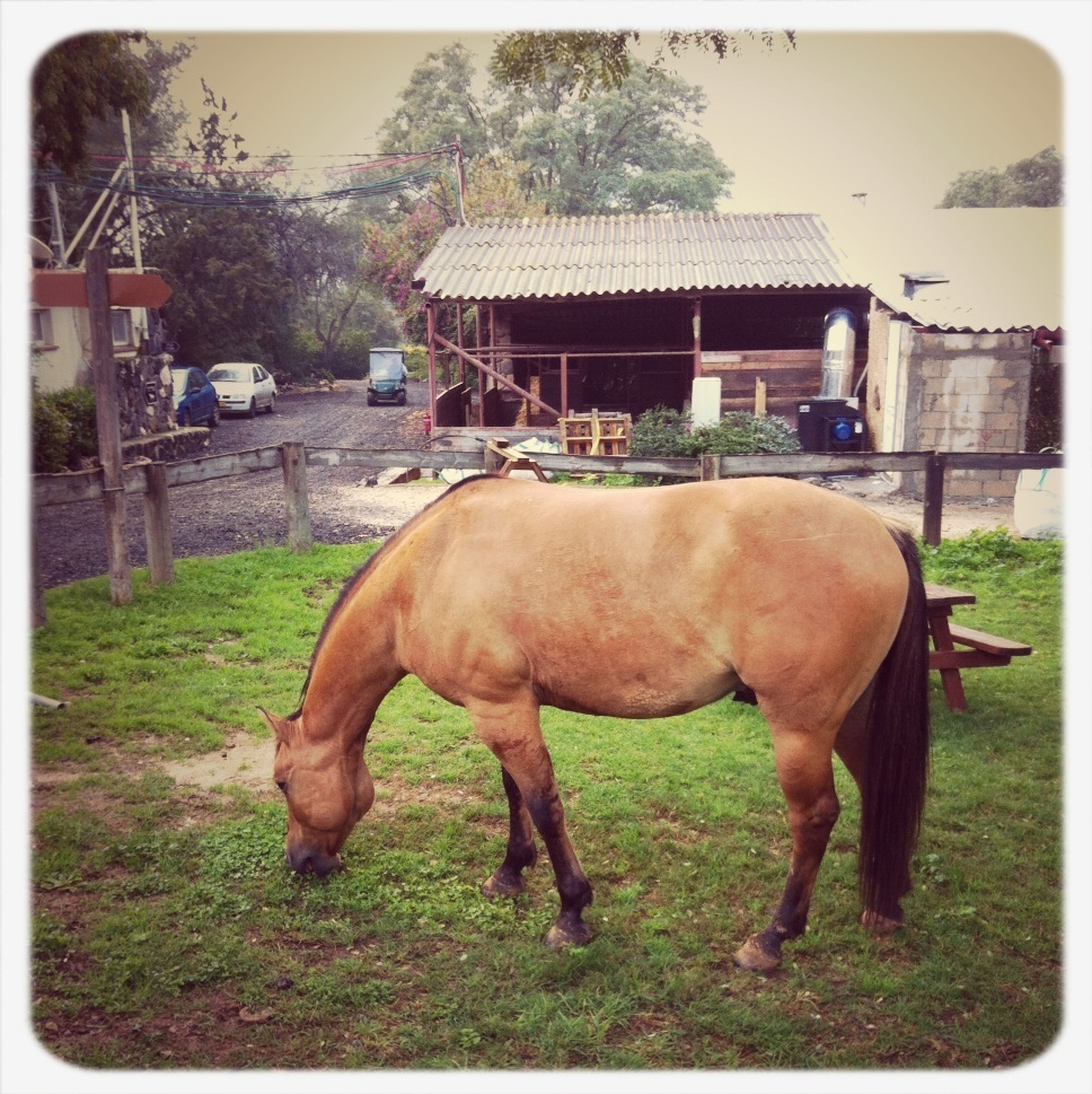 animal themes, domestic animals, mammal, horse, livestock, transfer print, auto post production filter, building exterior, built structure, field, architecture, grass, one animal, standing, cow, herbivorous, tree, two animals, brown, working animal