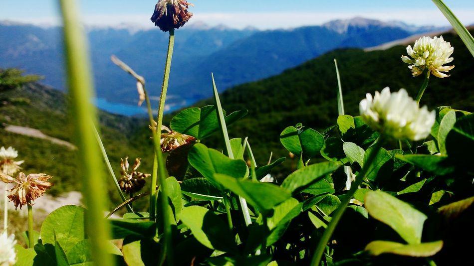 Sky Nature Forest Sun Montana Altura Clover