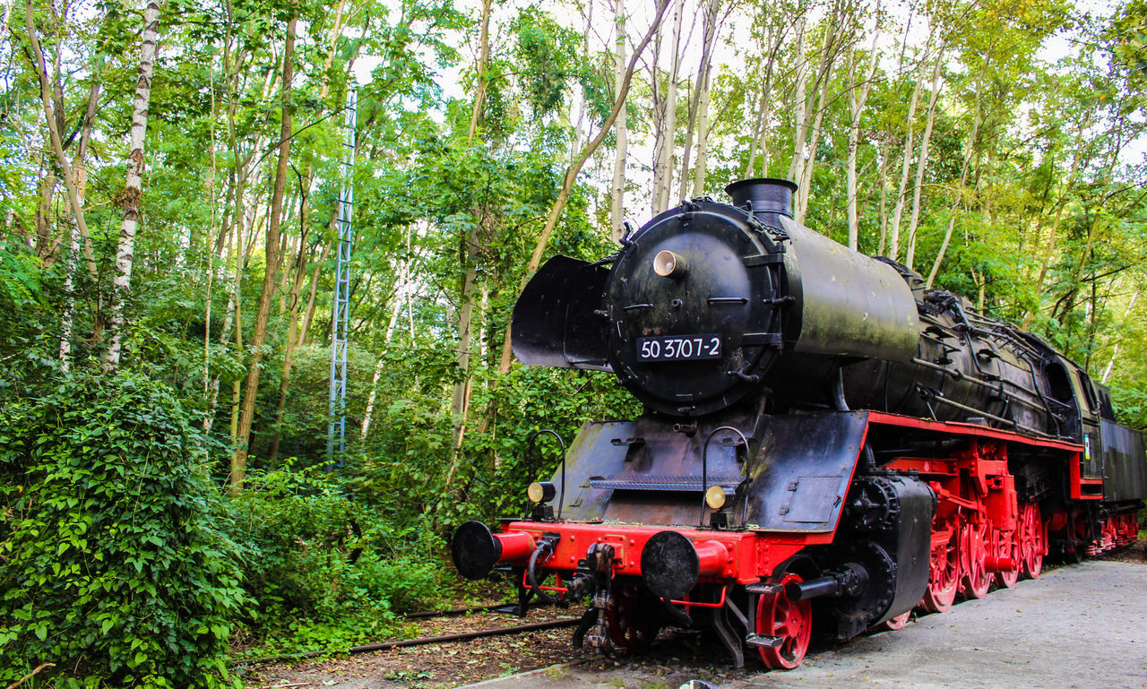 Old rail yard converted into a species-rich nature reserve. Berlin Day Germany History Locomotive Naturalreserve Nature Outdoors Train - Vehicle Transportation Tree Yard
