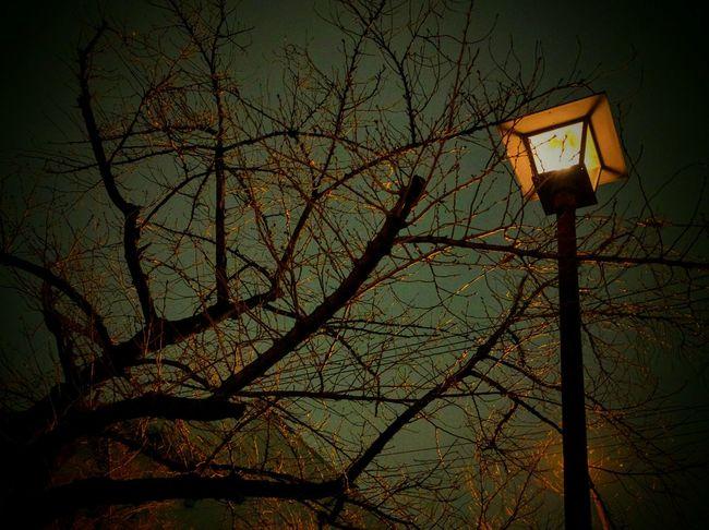 Night View Night Lights Trree Silhouette_collection Street Lamp Night Jog