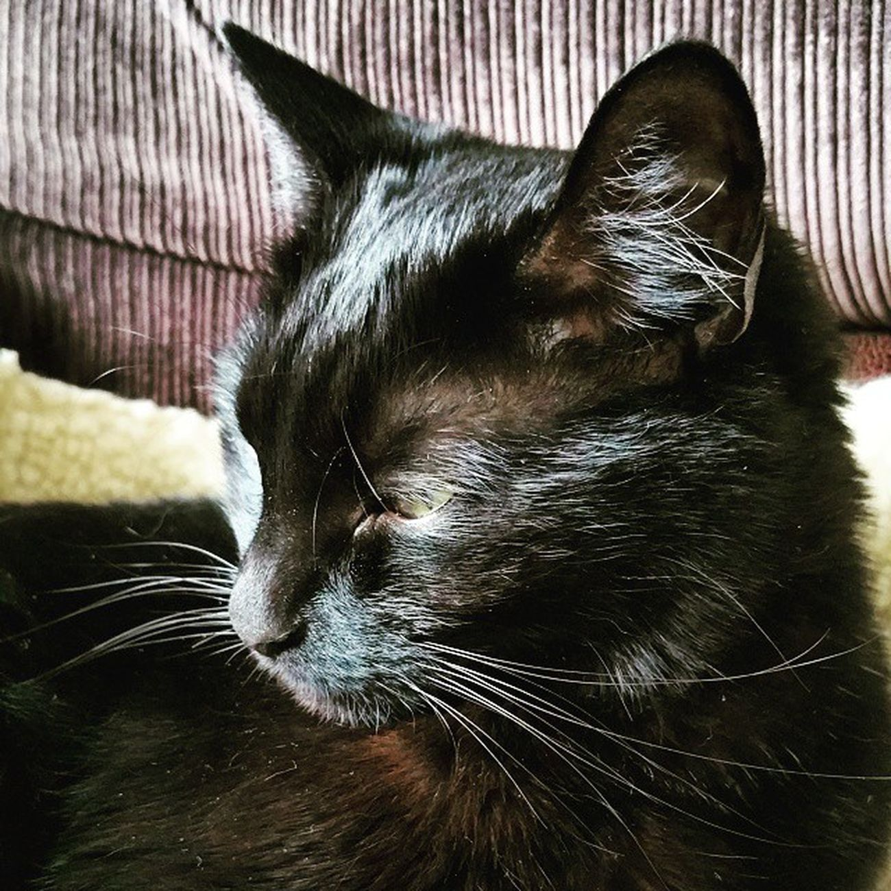 My perfect little Lucky on Caturday 🐱 Juno Cats Love Lovemycats MyBABiES Katemarie_uk Photooftheday Petsofig Petsofinstagram Catsofinstagram Catsofig Android BLackCat Beautiful Blackcatsofinstagram Blackcatsofig Today 200615 Crazycatlady Crazycatgirl