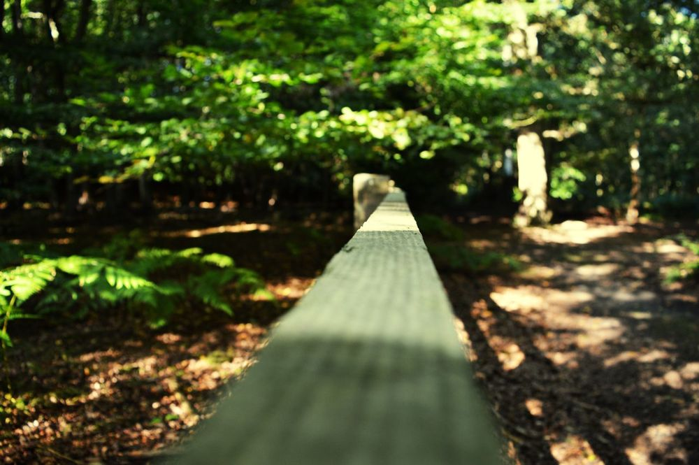 Eppingforest Different Perspective Mypointofview