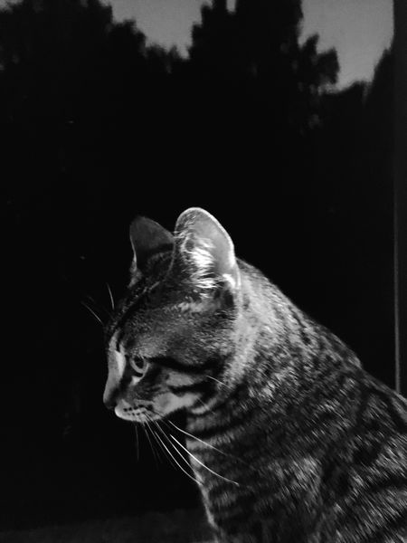 Night Kitty Cat Cat Side View Profile Iphone6