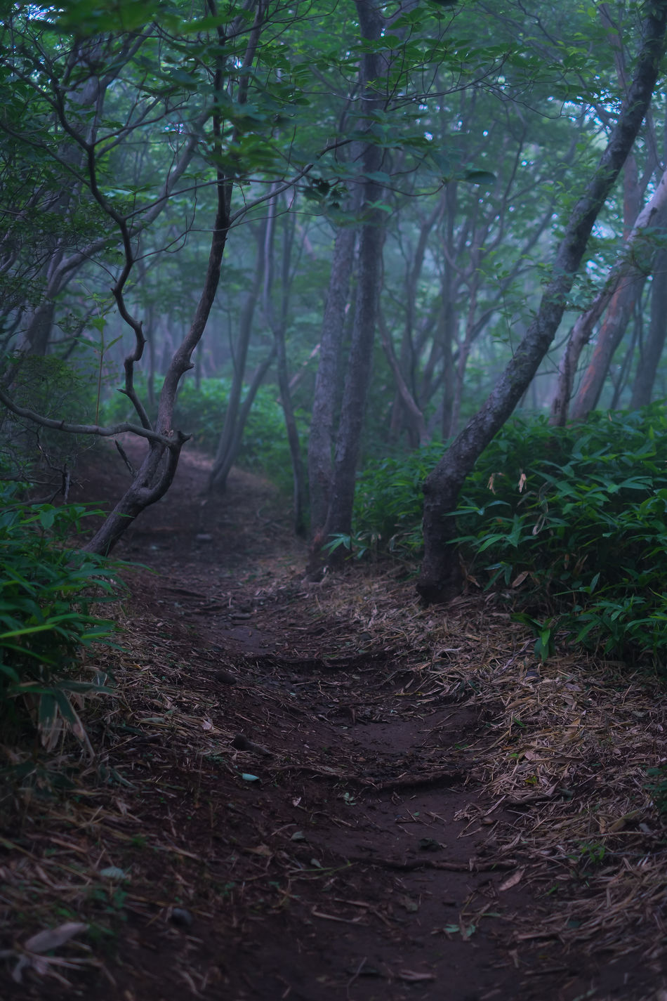 Nasu highlands, Tochigi, Japan. Autumn Beauty In Nature Branch Day Fog Forest Fujifilm Fujifilm_xseries Idyllic Japan Landscape Leaf Nature Nature Reserve No People Outdoor Pursuit Outdoors Scenics Tranquil Scene Tranquility Tree Tree Area Tree Trunk WoodLand