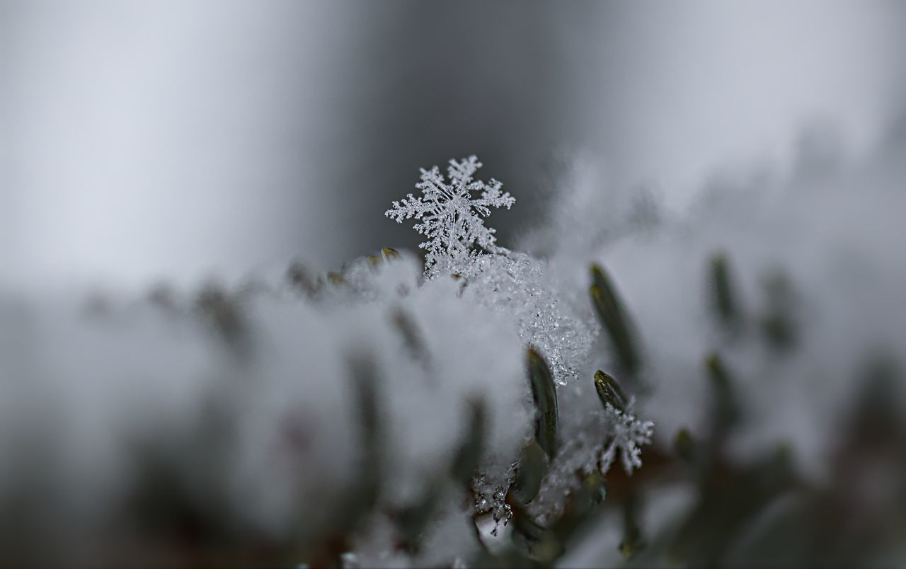 Beautiful stock photos of schneeflocken, cold temperature, close-up, winter, season