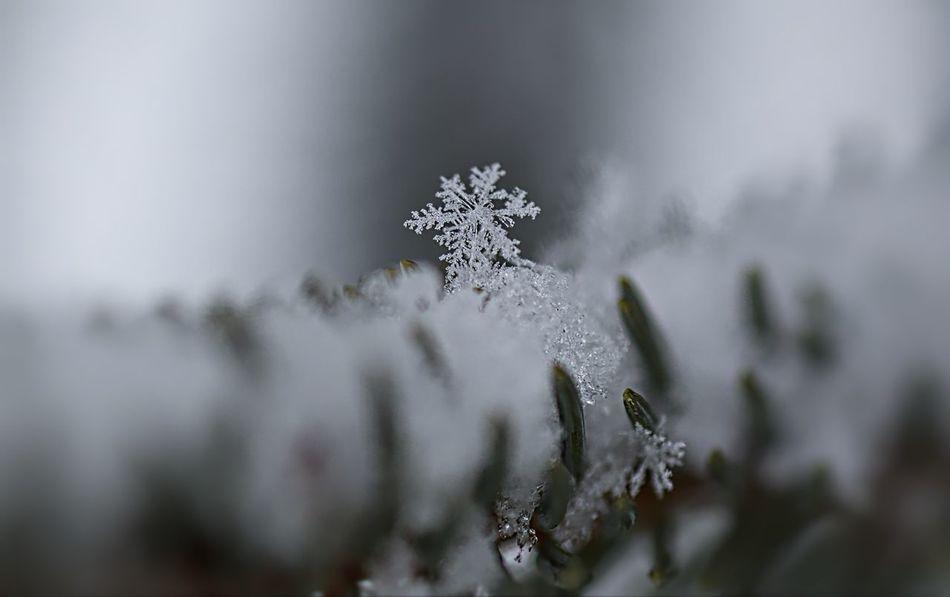 Beautiful stock photos of schneeflocken, cold temperature, close-up, winter, season