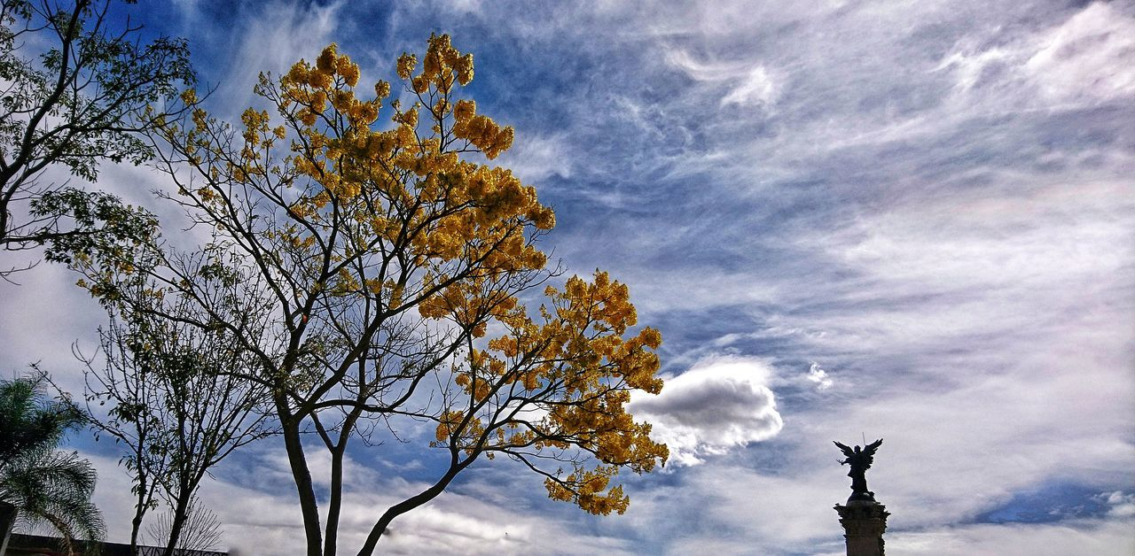 sky, low angle view, cloud - sky, tree, day, outdoors, nature, beauty in nature, no people, branch, statue, sculpture, growth