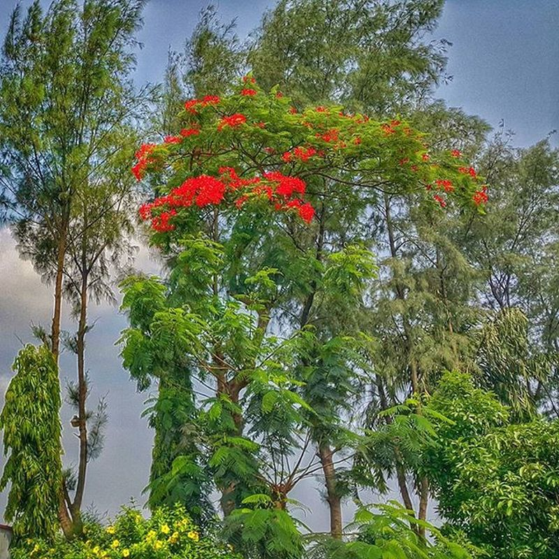 Roadside view! This picture is taken from the entrance of Off Beat restaurant in Dhaka Chittagong Highway, Bangladesh! I ckicked this photo on my way to Dhaka this morning! Bangladesh Flowerstagram Flowers Trees Leaves Green Red Summer Sunny Beautiful Outdoor RoadsideView NaturalBeauty EyeEm Best Shots - Nature Flowerpower🌸 EyeEm Best Shots EyeEm Nature Lover Note-4