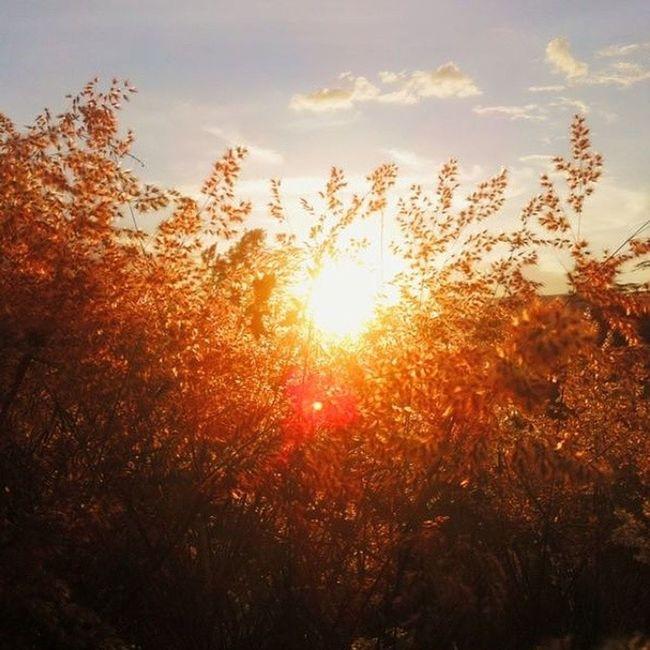 As the sun sets in Rift Valley, we hope through the night, PEACE & LOVE will prevail over at the Coast. ☀ Sunset Dusk Seekenya Seekenya_goldenhour sunsetsmadeinNakuru peace love unity weareone vscoedit vscogrid vscophotos vscocamgram sun iphoneography IGKenya vscohub vscocam vscogood warm tembeakenya igersKenya igersNakuru riftvalley Africa