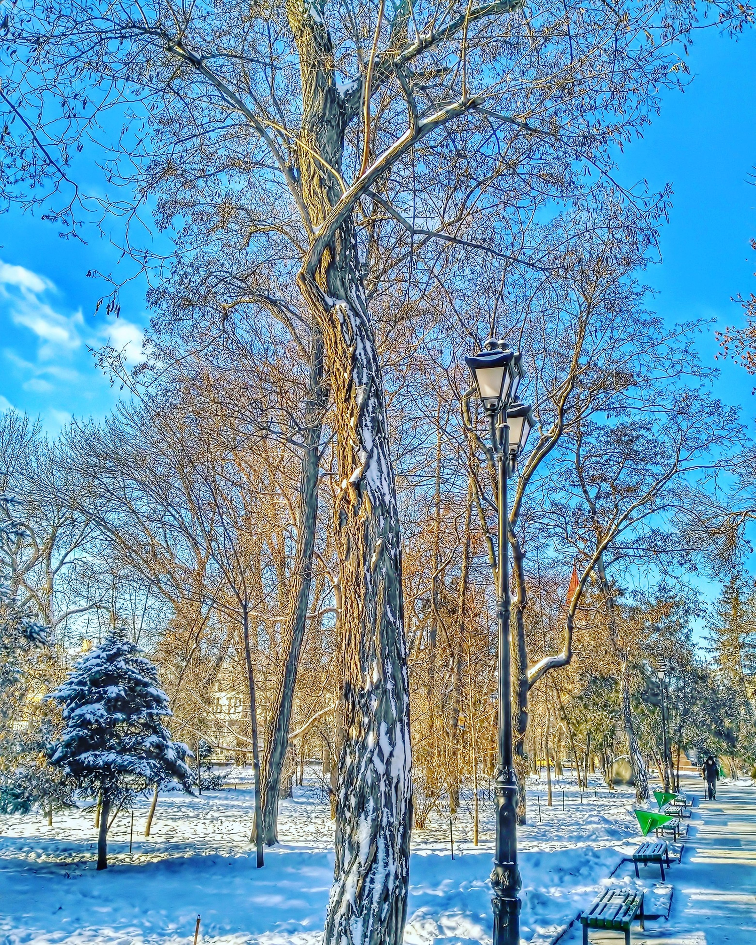 tree, sky, blue, nature, beauty in nature, no people, outdoors, day, scenics, low angle view, cold temperature, water, close-up