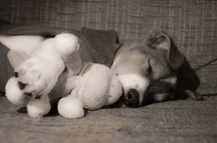 My baby dog...Relaxing Enjoying Life Art Dogy Photo Beautiful ♥ Blackandwhite Photography Hello World Enjoying Life Photography My World Vintage Dog Love Sleeping Dog Jack Russell Baby Awesome Photographer ArtWork Sweets My Love Lovely Sweet Friend