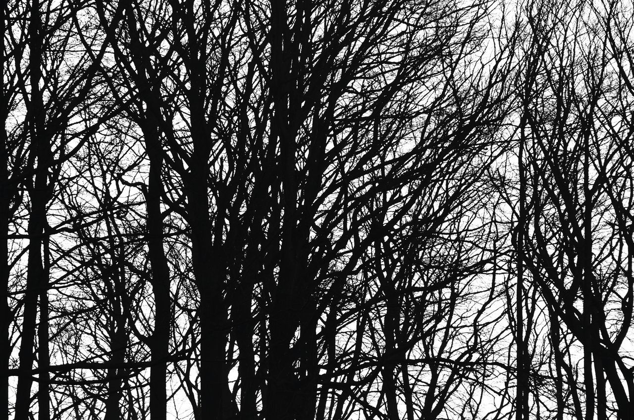 Tree Nature Backgrounds Full Frame Low Angle View Beauty In Nature No People Growth Outdoors Day Shootermag Eye4photography  EyeEm Masterclass Silhouette Blackandwhite Black And White Blackandwhite Photography Melancholy Melancholic Landscapes