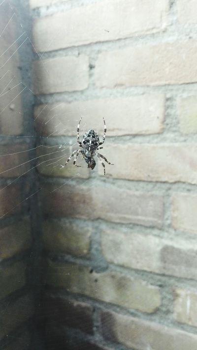 Spider Web Spidersofinstagram Insect Close-up Newoneyeem Spiders