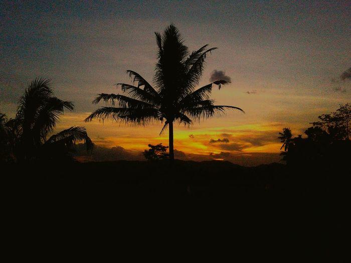 😅 Sunset Sky Sillouette Siluette Silluettes And Sky Tree Tree Silhouette Palm Tree Sunset Growth Sky No People