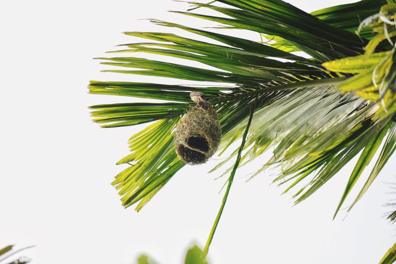 One Animal Insect Animal Themes Animals In The Wild Animal Wildlife No People Nature Bee Day Palm Tree Close-up Pollination Beauty In Nature Tree Outdoors Freshness Sky