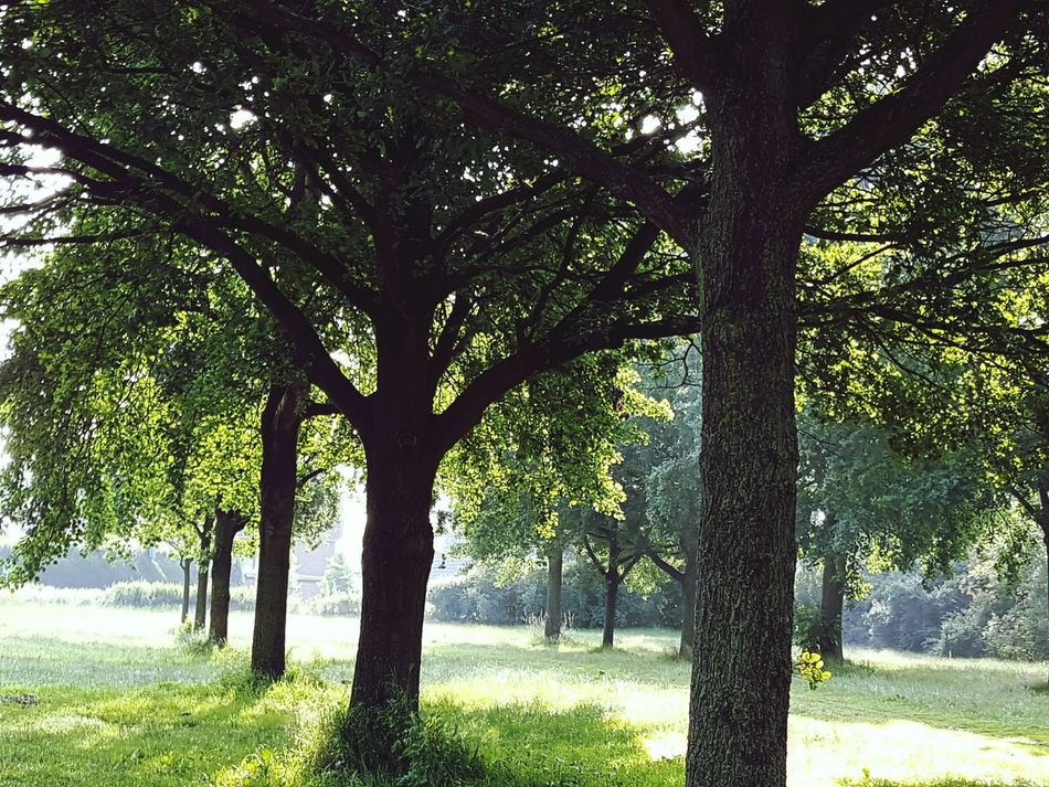 Trees Trees In The Morning Morning Light Morning Atmosphere Nature Nature Photography Nature Beauty Green Green Nature Tranquil Scene Tranquility Showcase June Growth Nature In All Its Glory Landscape Environment Bio Biology Abundance