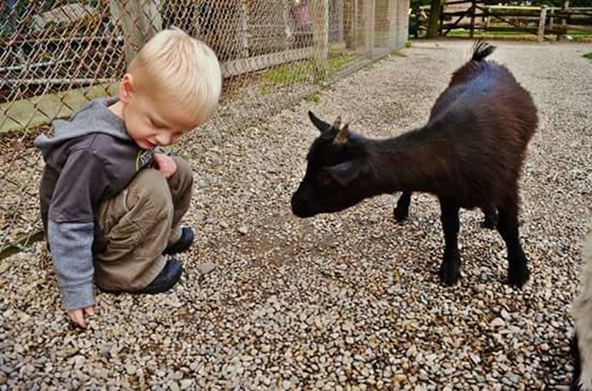 Goat Life Goat Cute♡ Childhood Friendly Cute Animals Nature_collection Naturelovers Nature Photography Wild Animals Up Close Friendship