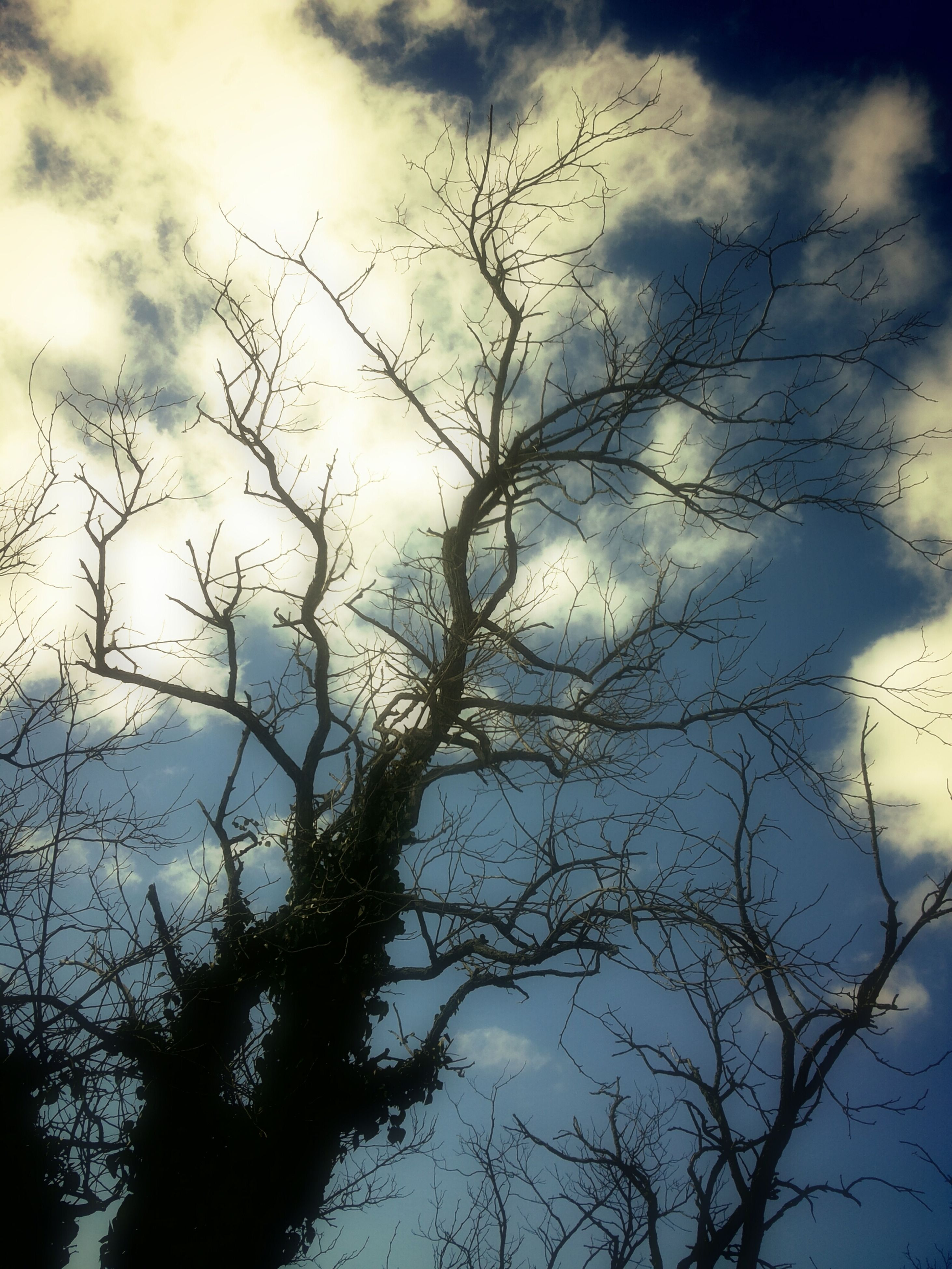 low angle view, sky, branch, tree, bare tree, cloud - sky, cloudy, silhouette, nature, cloud, tranquility, beauty in nature, outdoors, scenics, no people, day, high section, growth, overcast, weather