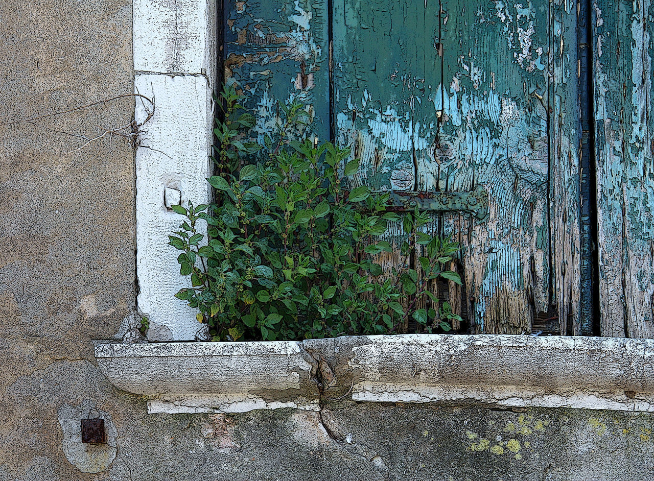 plant, no people, day, outdoors, growth, nature, architecture, ivy, built structure, close-up, tree