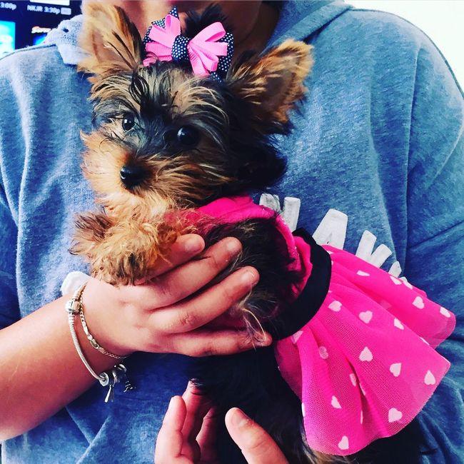 Puppy Love ThePrincess Playing Dress-up