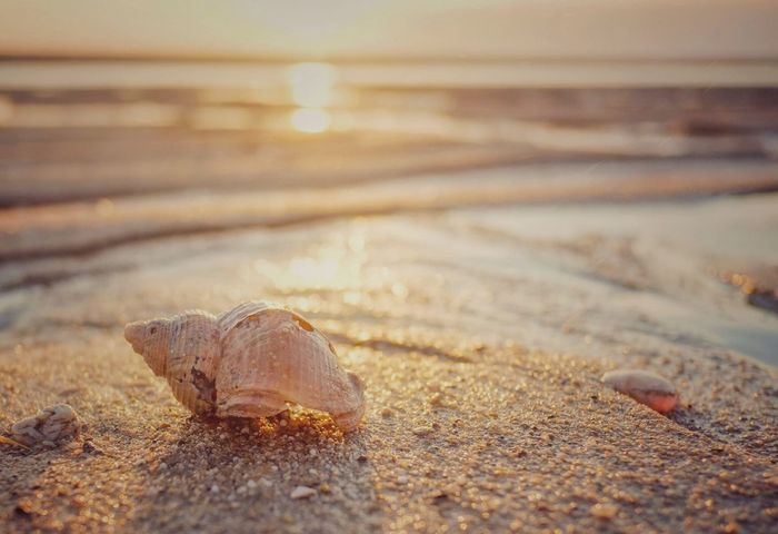 Magic shell Sand Beach Nature Outdoors No People Day One Animal Animal Themes Animals In The Wild Sea Close-up Sea Life Water