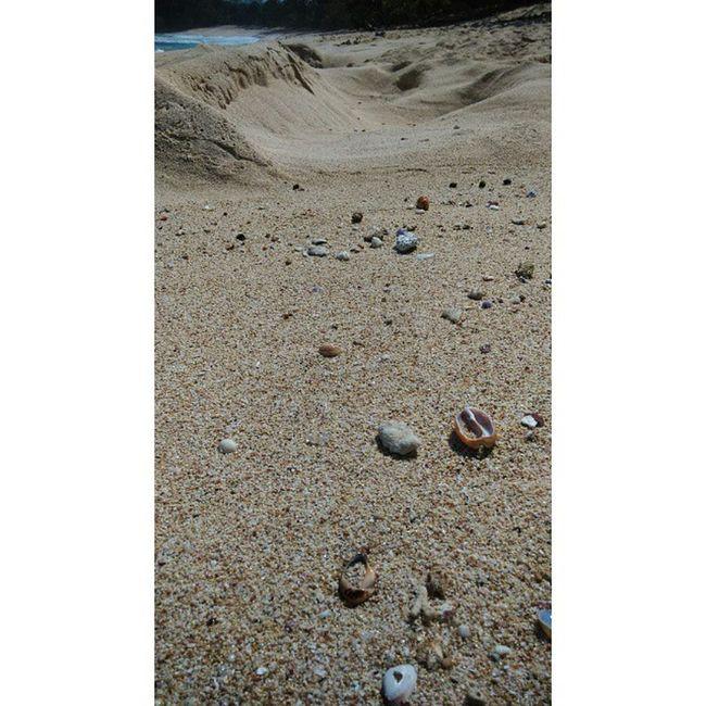 Ekos//istem🐚 Pure Pulaupenyu Nopolution Nohumanschaos StillFresh  Lotofsnails Lotofshells Greatsand Awesomerocks PrivateBeach Freshlyair