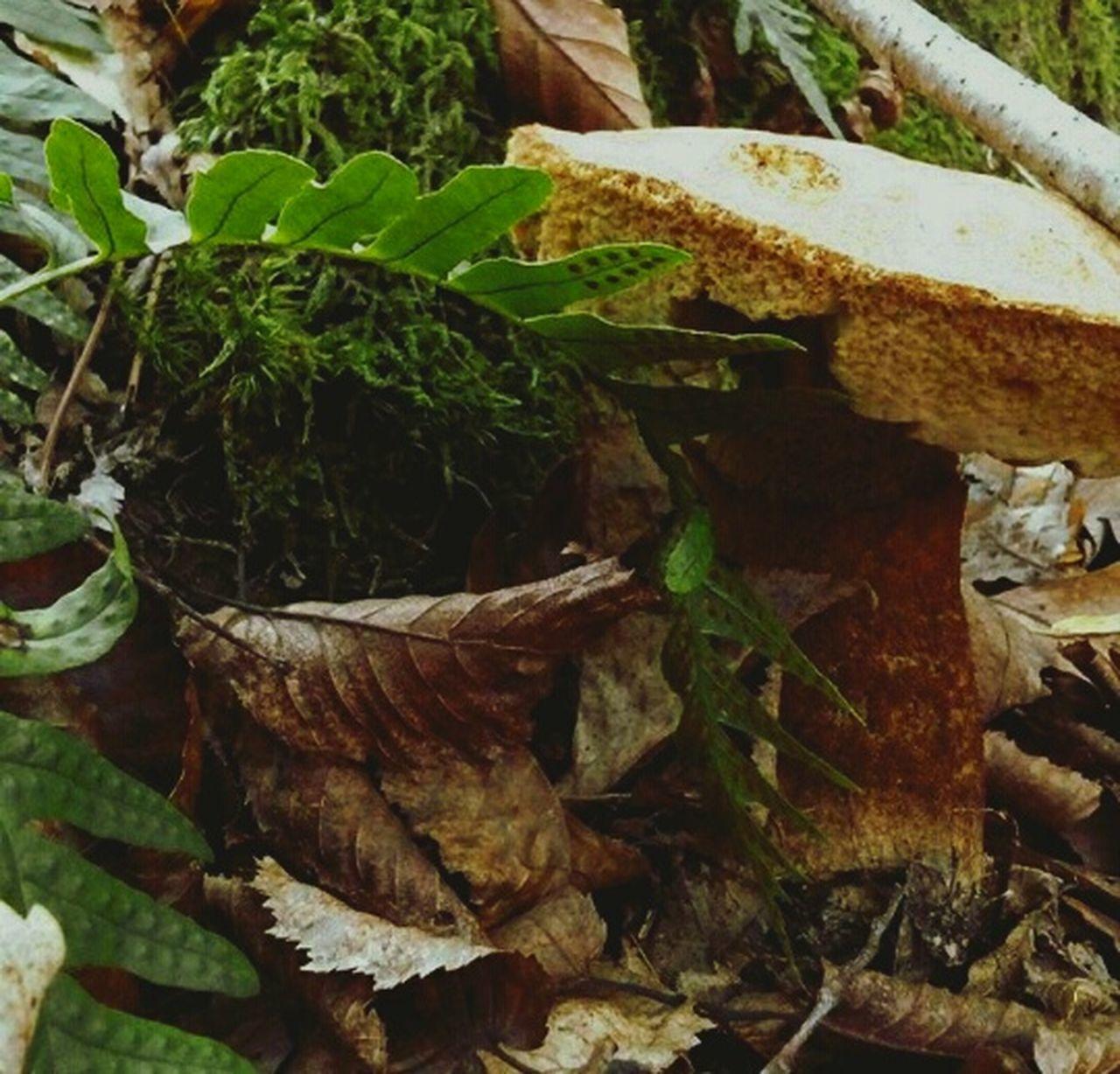 гриб грибочек папоротник осень