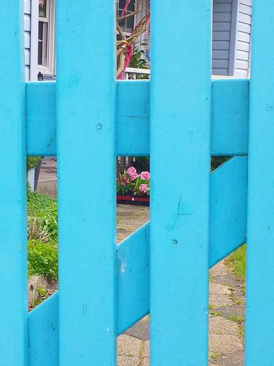 Blue Wave Blue Fence Garden Door Pink Flowers Blue Fence Against Pink Flower Blaue Holzlatten Wooden Fence Blue Wooden Fence Door Interesting Perspectives Looking Through Fence Ladyphotographerofthemonth Showcase: April Popular Photos Blue Album Blue Light Blue Blue Blue Blue Fence Gate Fence Blue Wooden  Holzlatten Learn & Shoot: Composition