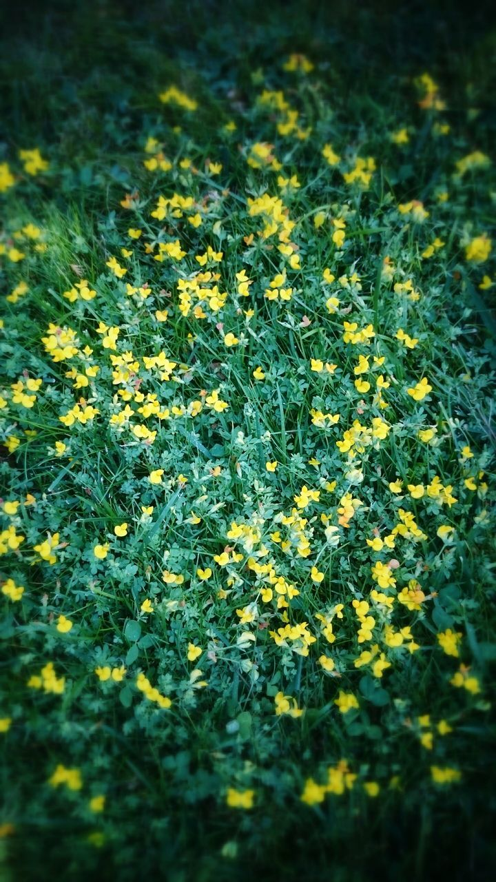 nature, green, growth, beauty in nature, yellow, flower, plant, day, tranquility, outdoors, no people, freshness, close-up