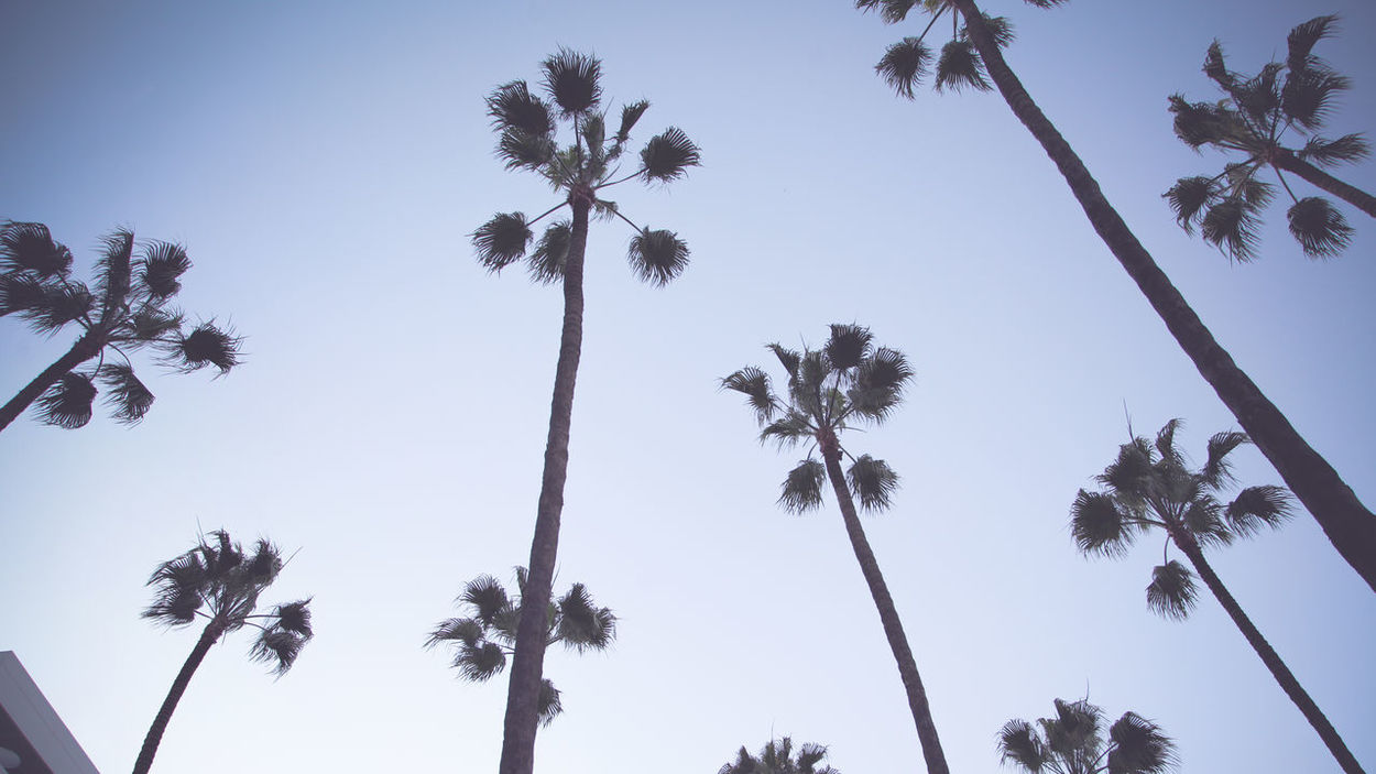 Streetphotography Canon5DmarkII  CasablancaStreets Composition Palm Trees