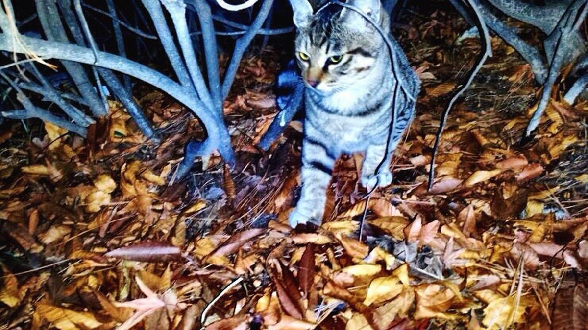 Nature Photography Seoukchon Lake Cats Cat Lovers LOTTEWORLD Alley Cat Little Cats A Feral Cat