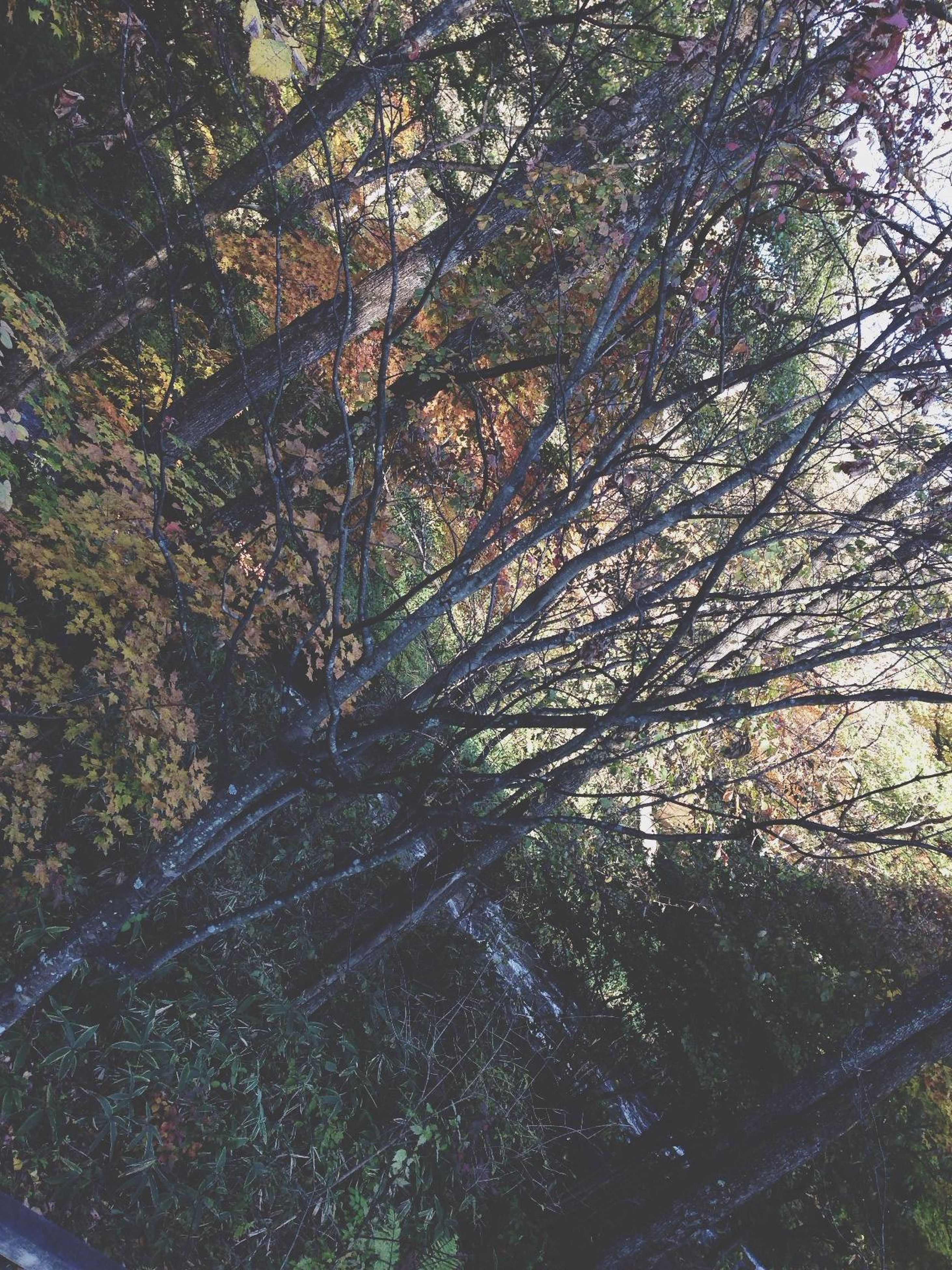 tree, growth, branch, nature, tranquility, tree trunk, sunlight, beauty in nature, forest, day, outdoors, no people, park - man made space, tranquil scene, low angle view, scenics, green color, built structure, shadow, autumn
