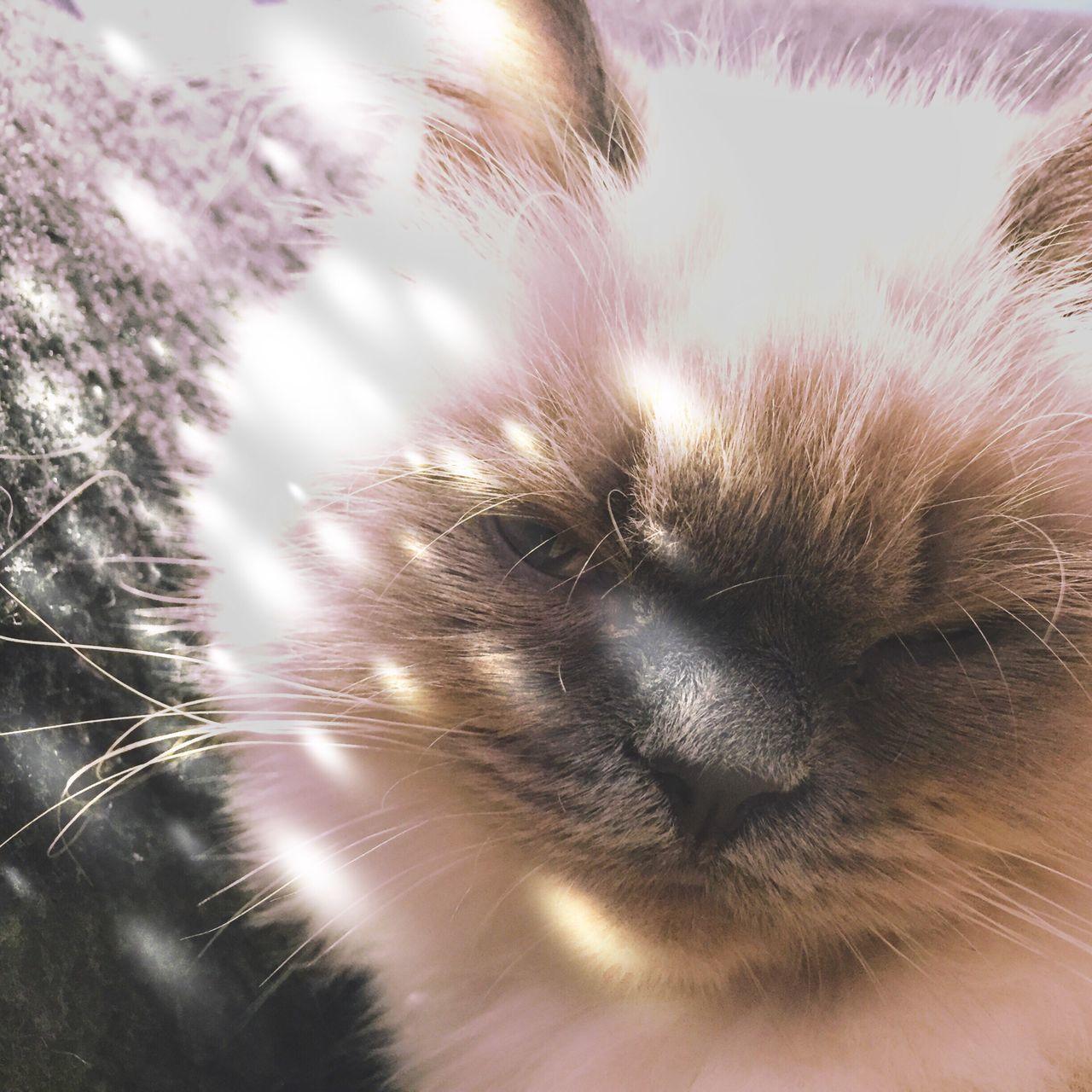 One Animal Cat Animal Themes Close-up Indoors  Snapshots Of Life Portrait Mobilephotography Eyem Best Shots
