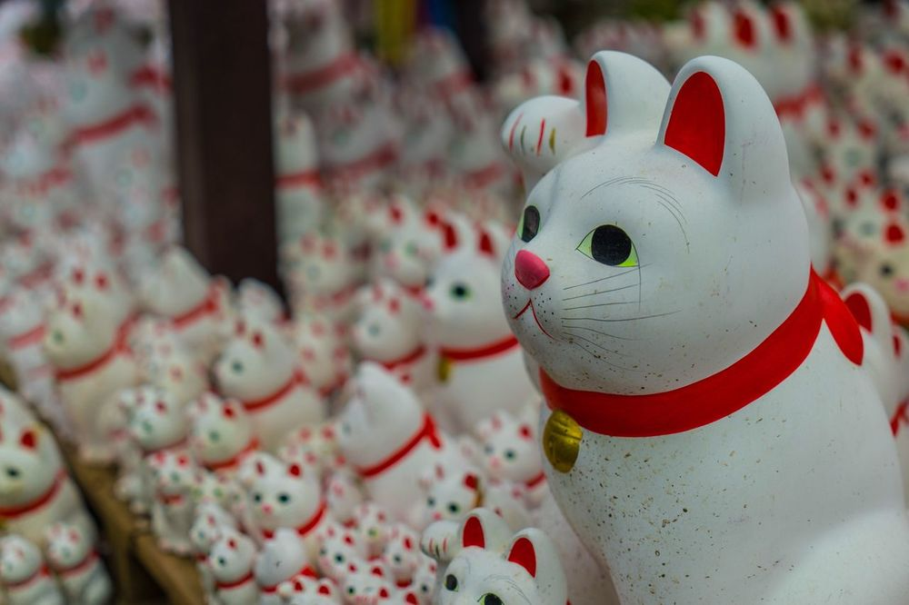 Cats Cats Lovers  Shrine Gotokuji Japan Landscapes Japan Photography Japanese Culture EyeEm Gallery Eyem Best Shots Eye4photography  EyeEmBestPics Eyemphotography EyeEm Best Shots - Landscape Landscape_photography Landscape_Collection Landscape Tokyo Cityscapes Cats Of EyeEm Catsagram Catsofinstagram Cat Lovers Cat♡ Cats Cat