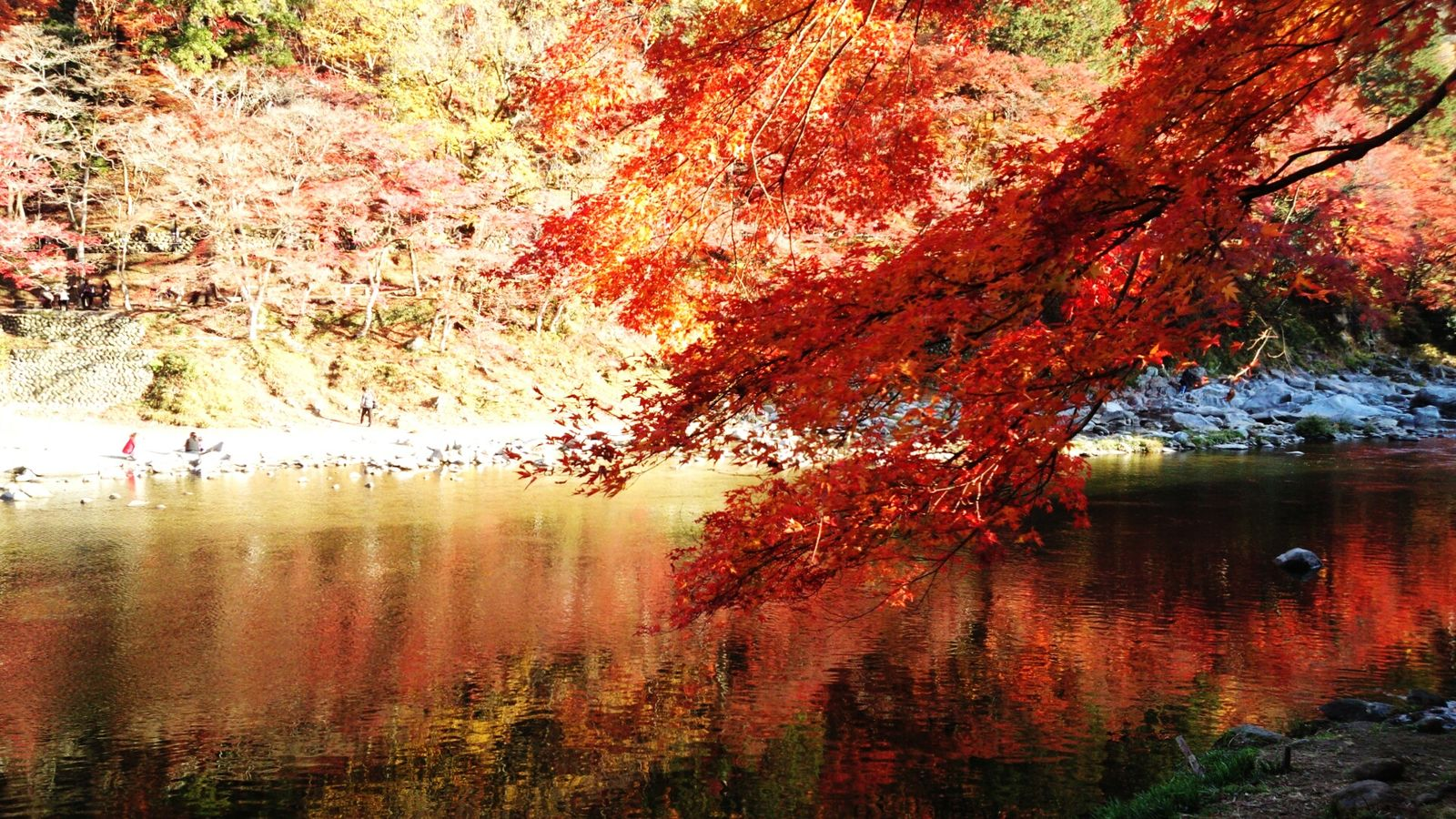 Kyoto Japan Autumnal Tints Waterfront Water Tree Beauty In Nature 京都の紅葉