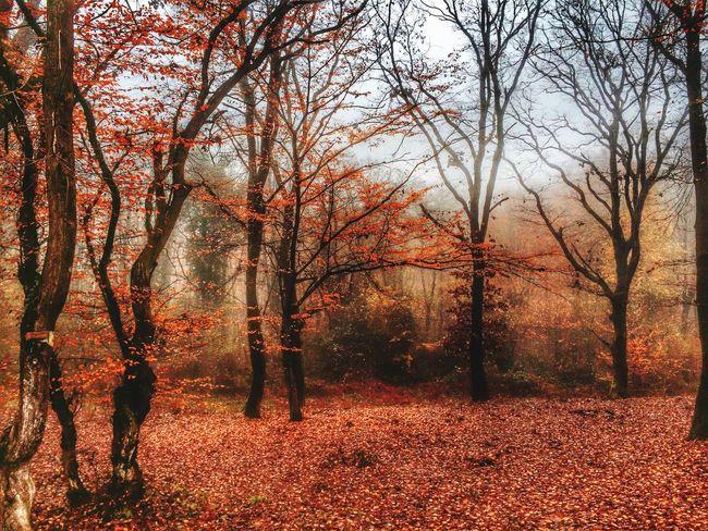 Naturelovers Landscape Trees Landscape_Collection Landscape Photography EyeEm Nature Lover Nature Natur