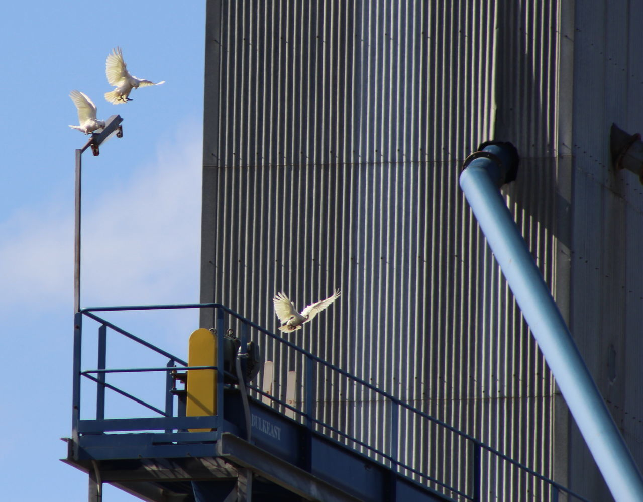 Beautiful stock photos of industrial, Animal Themes, Animals In The Wild, Architecture, Bird