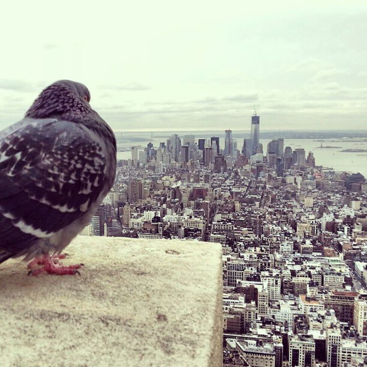 A pigeon enjoying the view.. Empirestate Building Observatory Newyork Manhattan NY NYC Buildings Architecture Bird