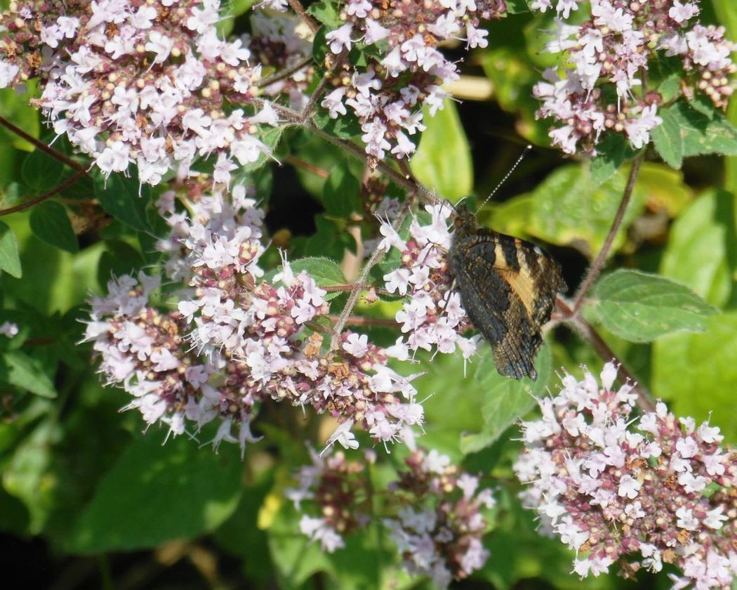 Old Railway Line Strawberry Line Somerset Butterfly