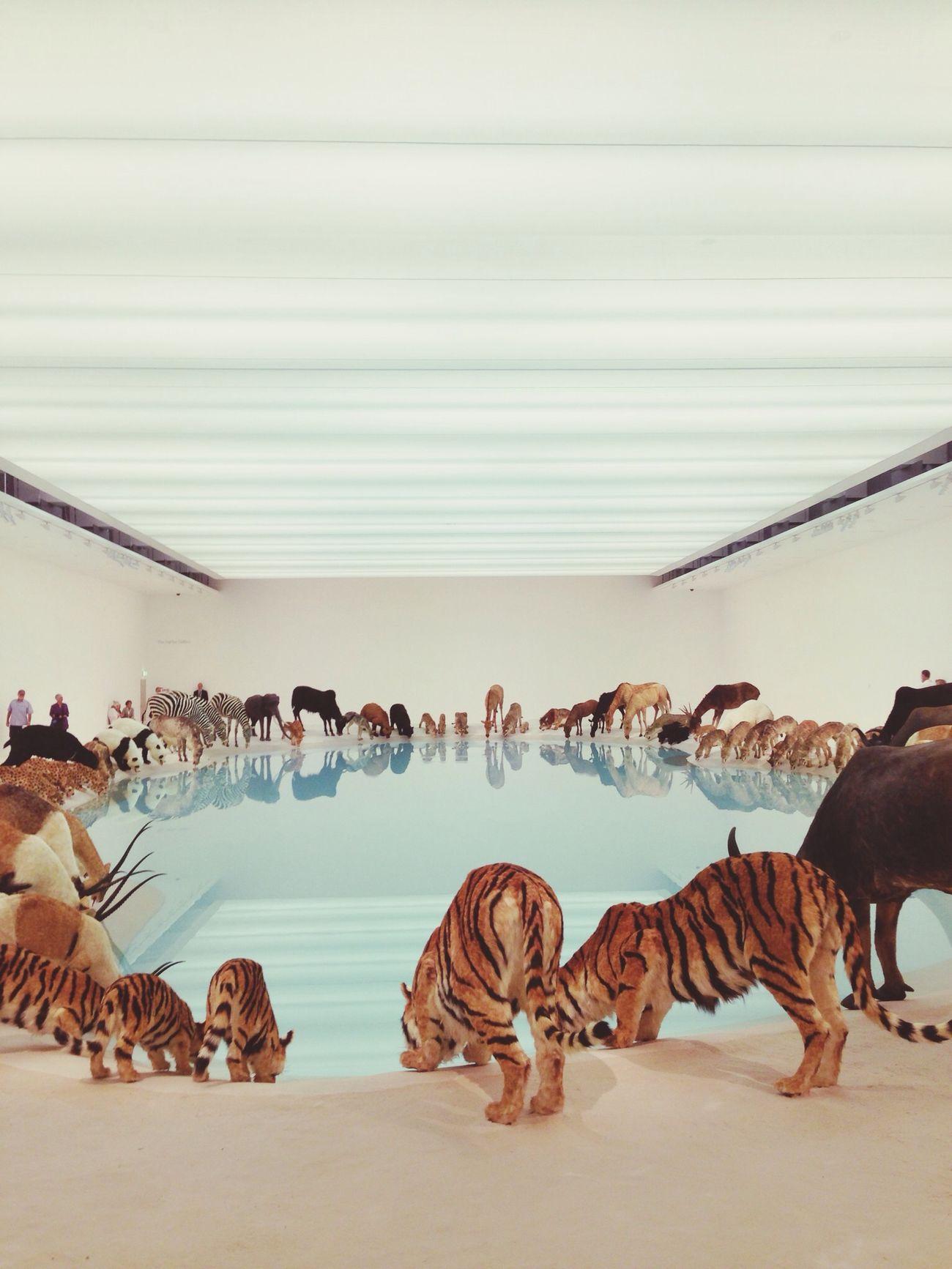 Cai Guo-qiang Fantastic Exhibition