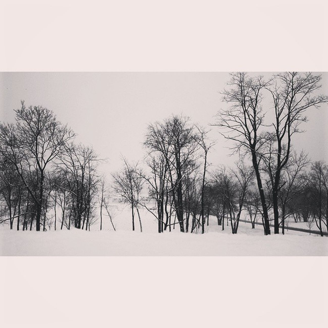 Taking a walk on snow can heal the soul. Blackandwhite Bnw Bnw_society Snow Westerville Ohio Insta_bw