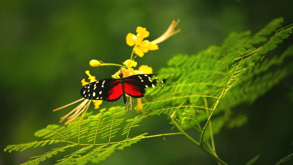 Beautiful stock photos of butterfly,  Animals In The Wild,  Beauty In Nature,  Butterfly,  Close-Up