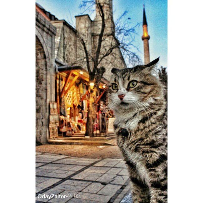 Canon Ayasofya Turkey Photography Street Cat