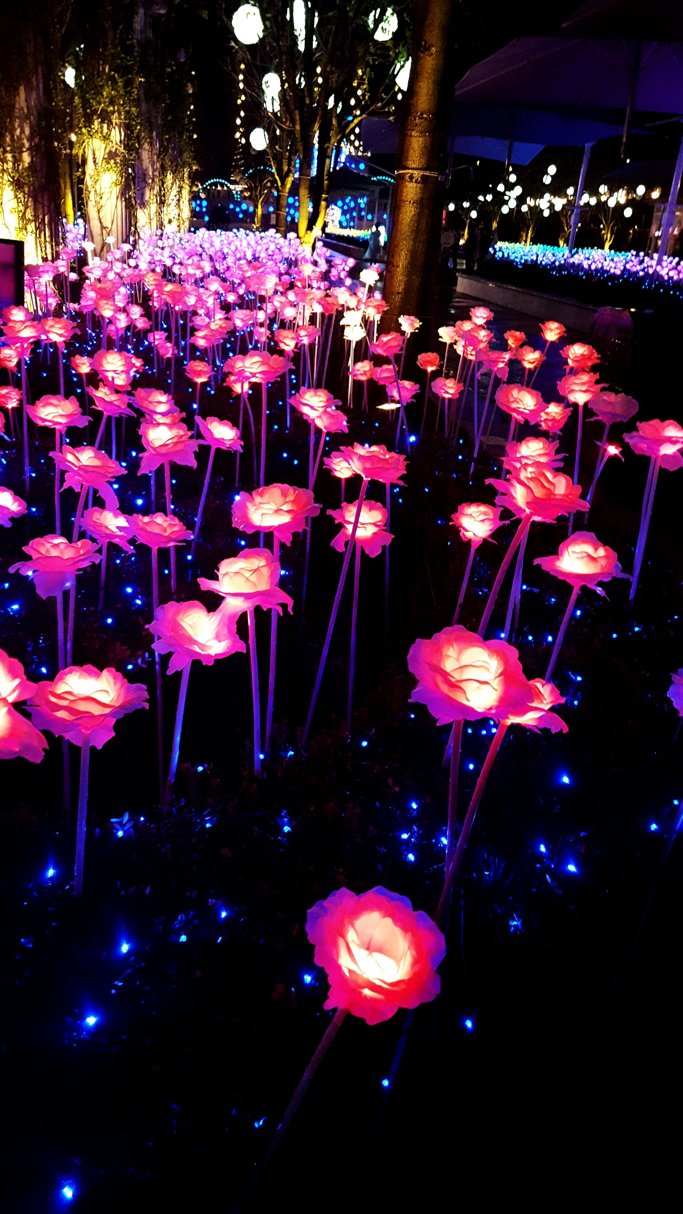illuminated, night, lighting equipment, indoors, hanging, decoration, celebration, arts culture and entertainment, abundance, pink color, flower, light - natural phenomenon, in a row, light, event, large group of objects, multi colored, arrangement, tradition, no people
